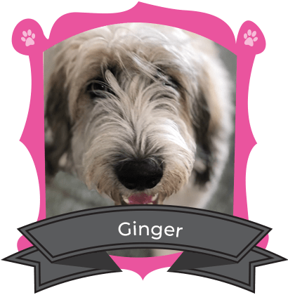 June Camper of The Month Is Ginger